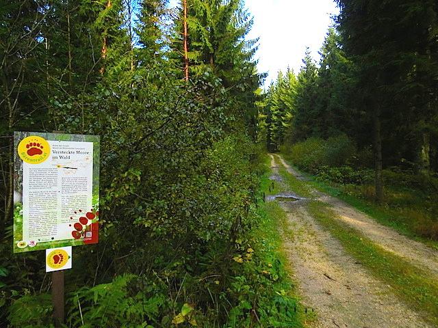 Im Waldhofmoor