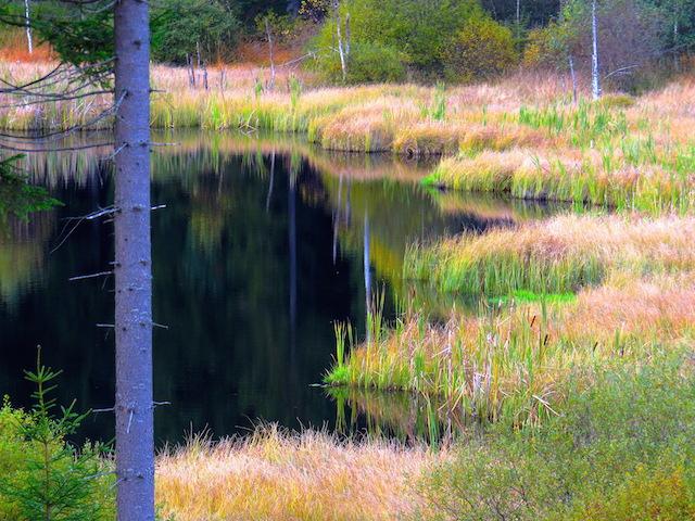Der Rubner Teich