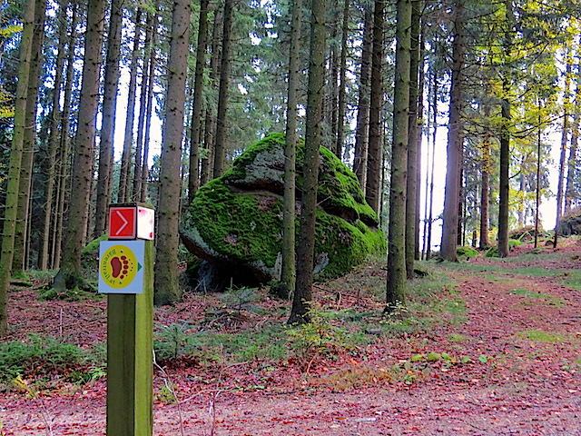Restlinge im Wald