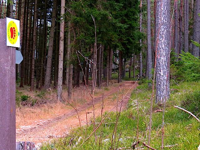Im Föhrenwald