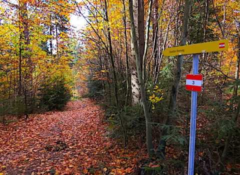 Zwettler Bierweg 52<br>(ab Oktober 2018)