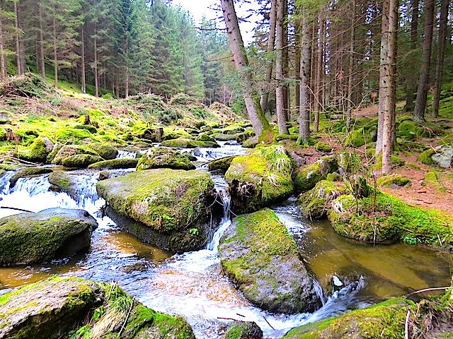 Im Lohnbachtal