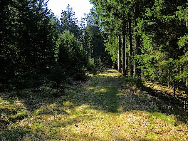 Ehemaligen Waldbahntrasse