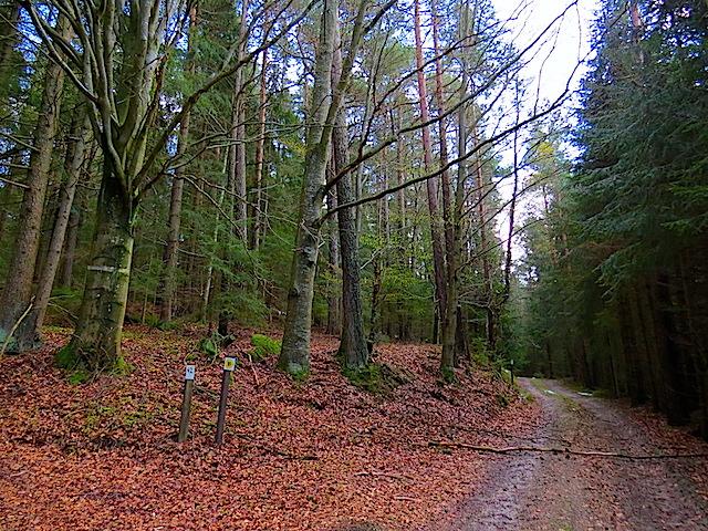 Im Mischwald