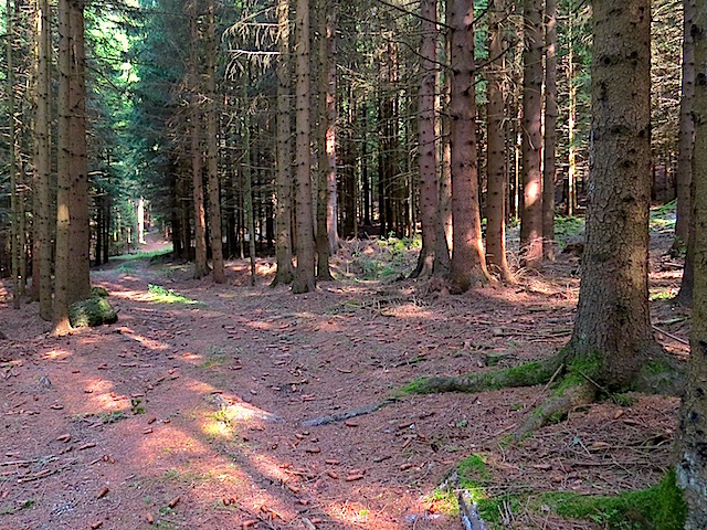 Waldweg Buchberg