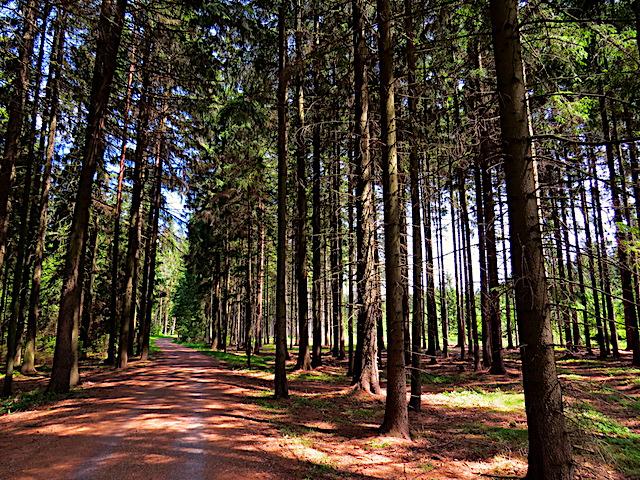 Im Großen Kobelwald