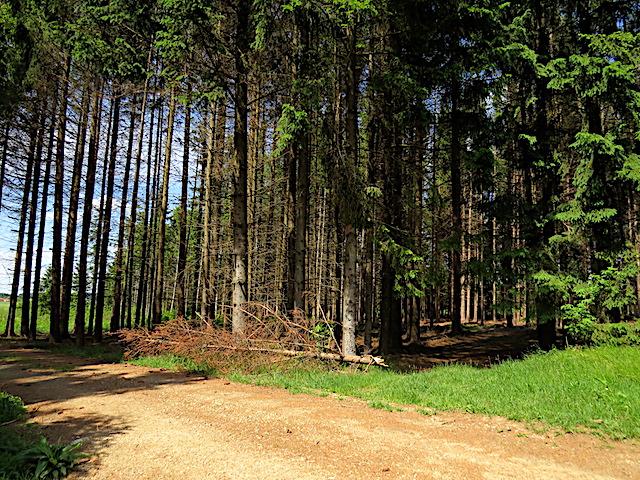 Rechts in den Wald !