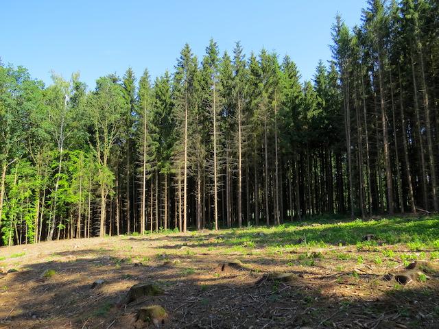 Durch den Wald