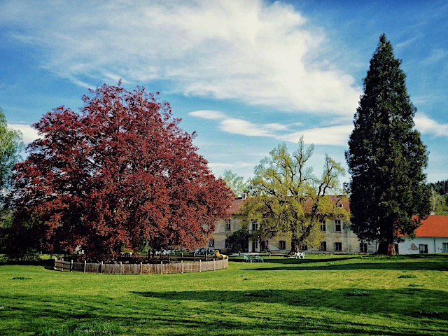 Bäume im Schlosspark