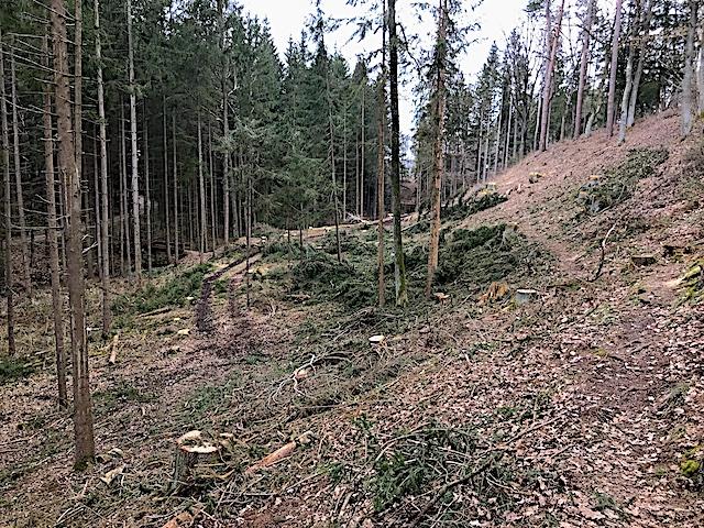 Walderlebnisweg 51 neu markiert