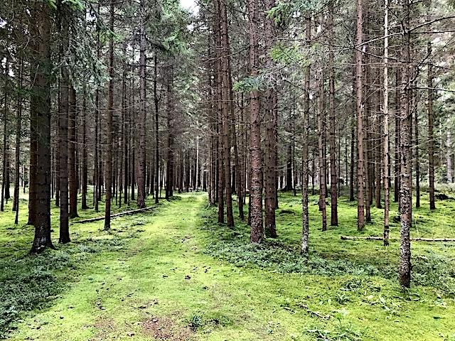 Im Hochwald